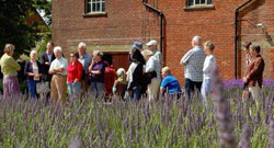 Lavender Fields Open Weekend